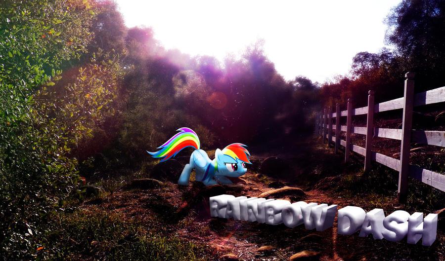Rainbow Dash Nature Wallpaper by InternationalTCK