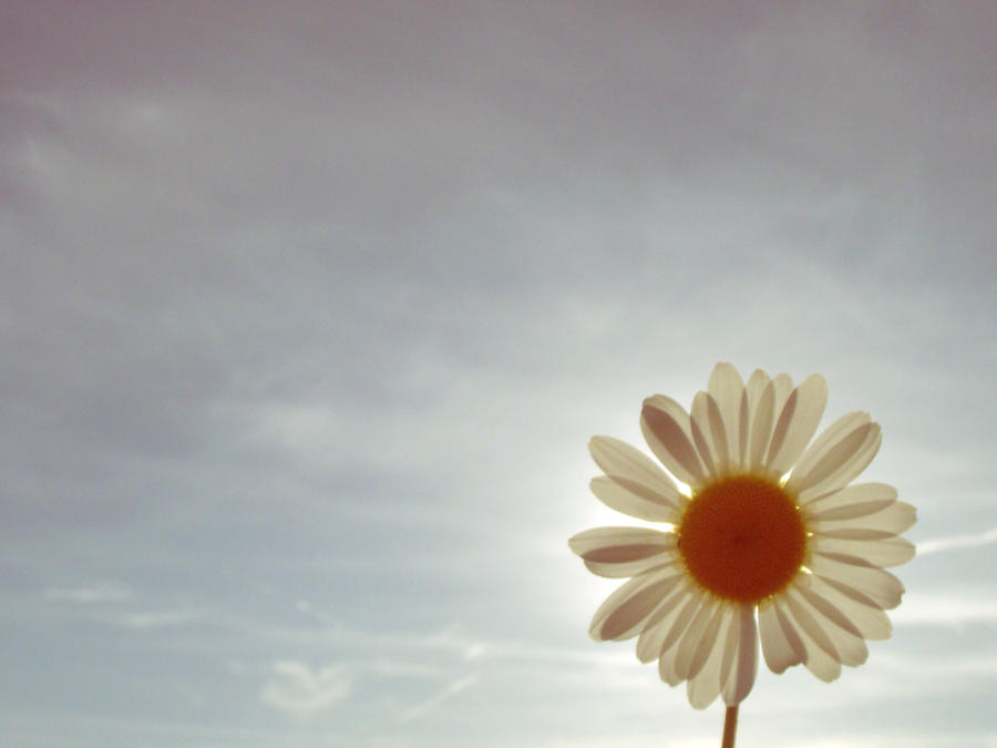 Daisy-sun by GreenShadowSpirit
