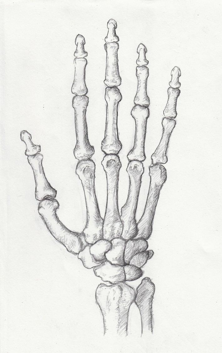 bones in your hand by mavinci on deviantart