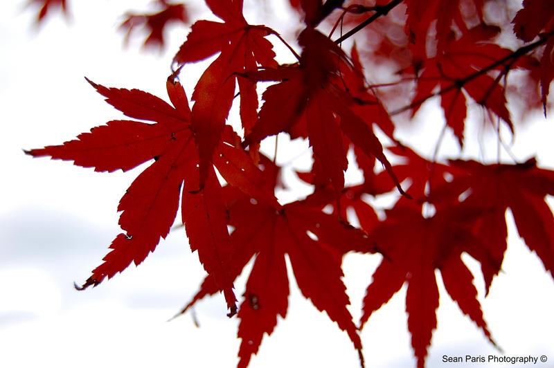 autumn overcast