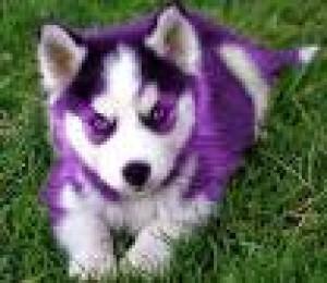 PurpleTornado9000's Profile Picture