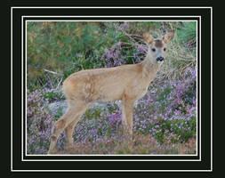 roe-deer kid by never-change