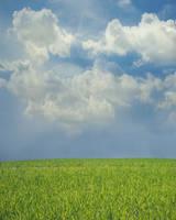 spring meadow by monika-es-stock
