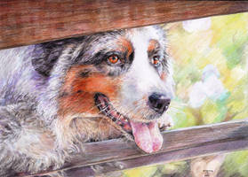 dog by Koshka-tanya