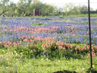 Texas Wildflowers 2 by BldngHrtCnsrvtv