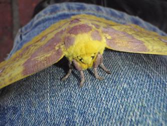 Moth by BldngHrtCnsrvtv