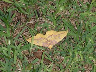look like a leaf by BldngHrtCnsrvtv