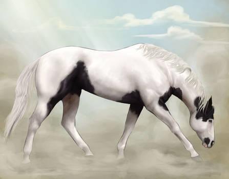 Berry Cool Stallion