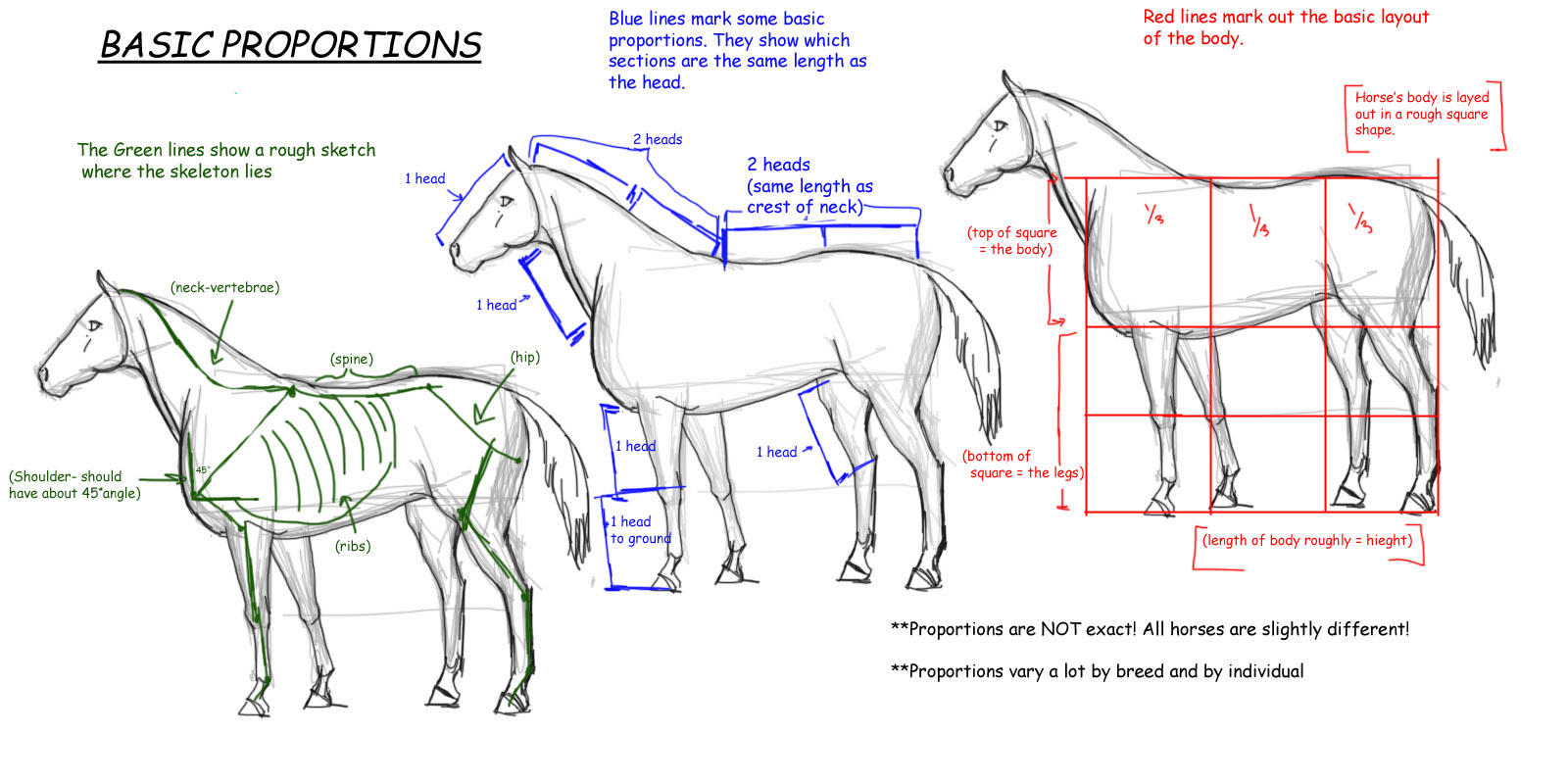 Horse Tutorial:Proportions by vixentheangryfox on DeviantArt