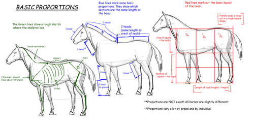 Horse Tutorial:Proportions
