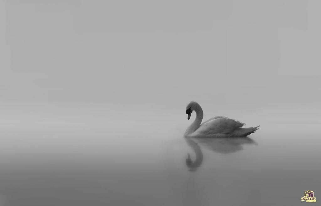 Serenity by aliawais