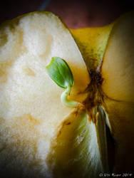The Beginning by uterueger