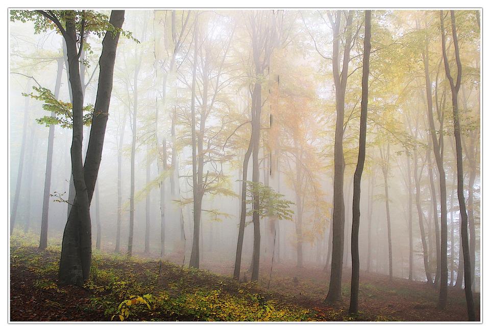 autumn Scenary - ClippingPathZone by Sila-Mahmud