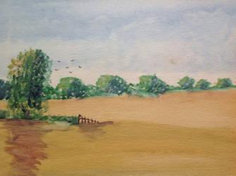 Cornfield - oil on canvas by Heatherag