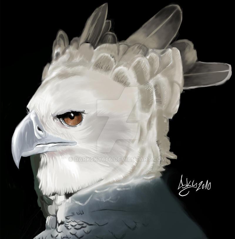 Harpy eagle picture harpy eagle image - Harpy eagle hd wallpaper ...