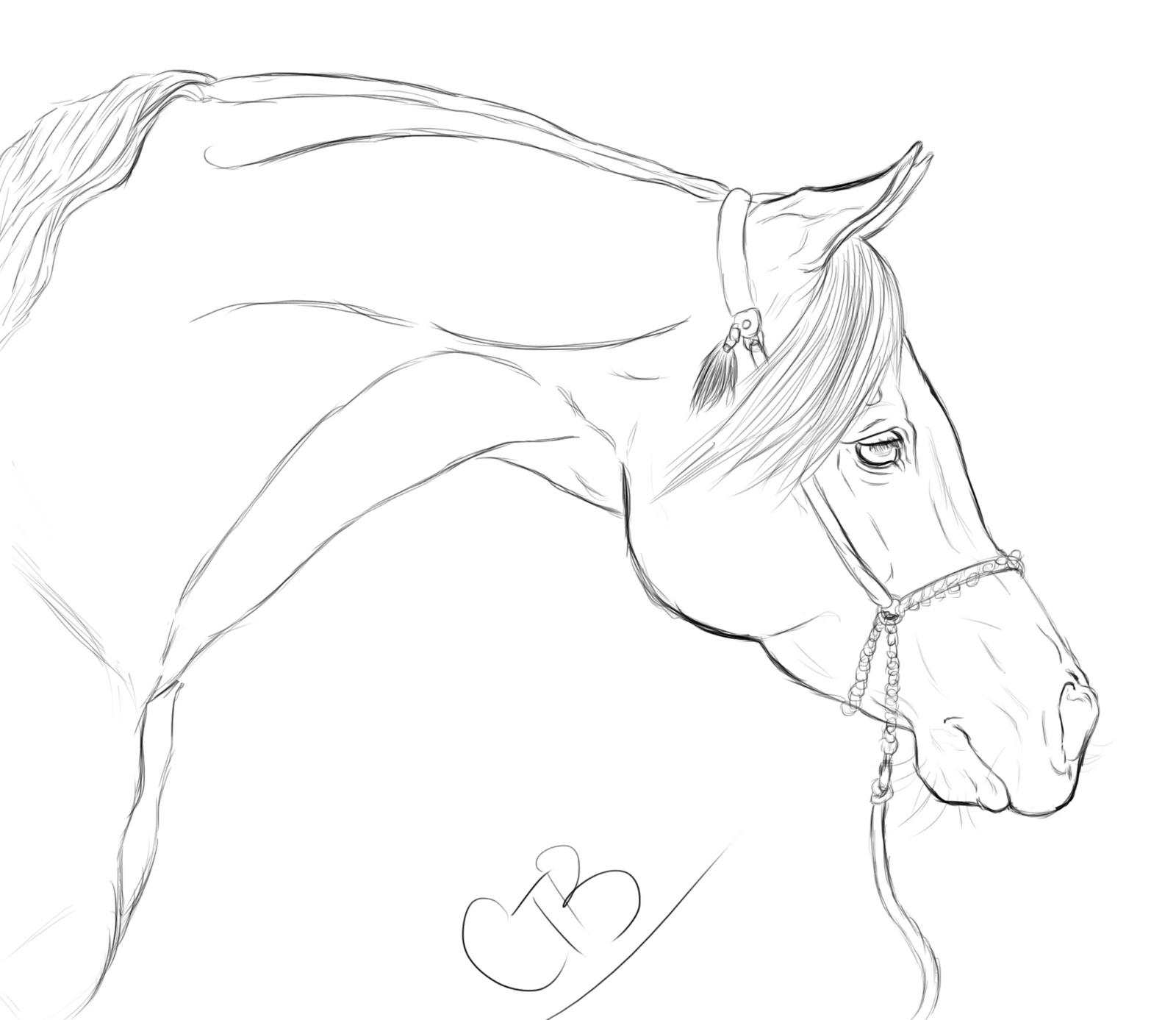 Line Art Information : Arabian horse line drawing