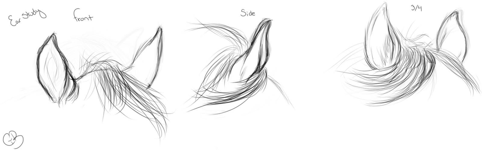 Sketches~ Horse Ear Study by ChellytheBean on DeviantArt Ear Sketches