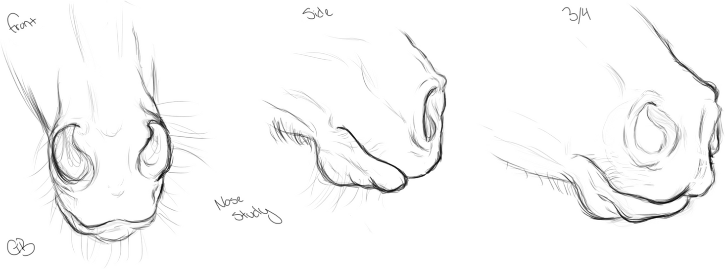 how to draw a horse eye step by step