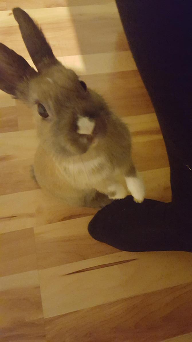 Rabbit Stock~ Koggy 24 by ChellytheBean