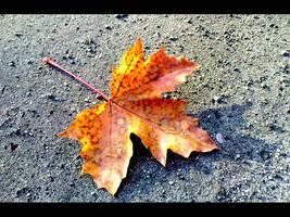 Gold Leaf by olcik13