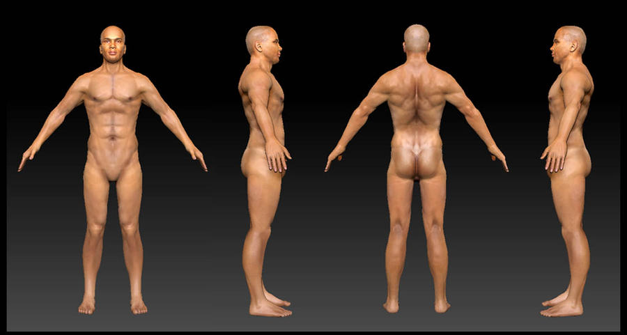 Average Man Anatomy Sculpt By Audreee On Deviantart