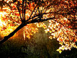 October evening sun