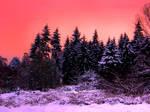 Sunrise in the woods