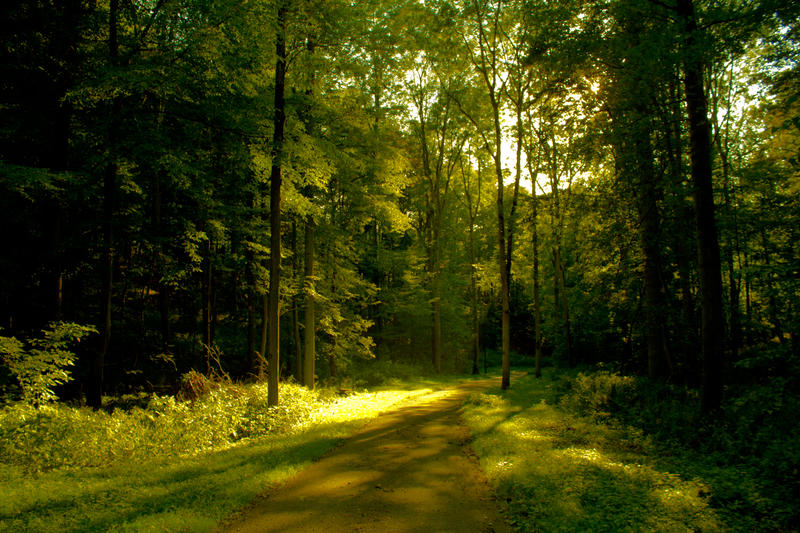 In forest wonderland '11 by JaneXxX
