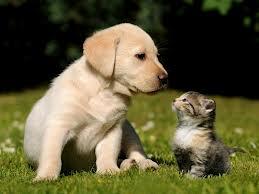 Dog Meats Cat Treaty by Wolfgirl-livy