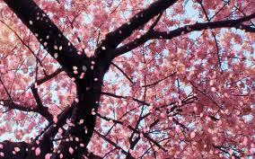 Blossom by Wolfgirl-livy