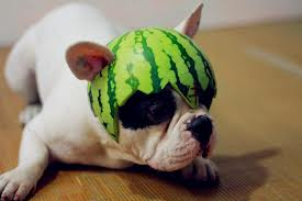 Can Dogs Eat Watermelon Reddit