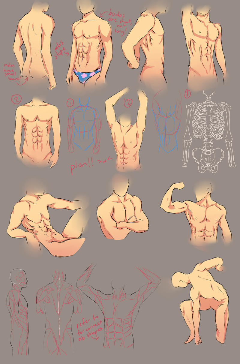 Male Anatomy Study by chi-u