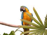 parrot stock