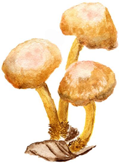 Fairy Ring Mushroom by Akaiko