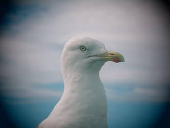 quack by victorabbe666