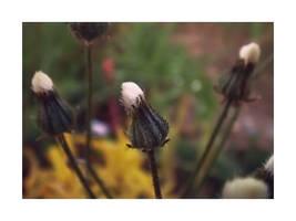 Bouton de fleur by DearArts