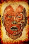Anatomy II