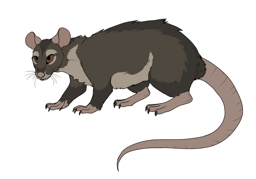 DT with Warrior: Rat by Sparaze