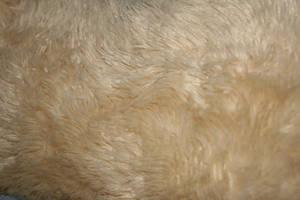 Free Faux Fur Texture by JennahIsSoCoolLIKE