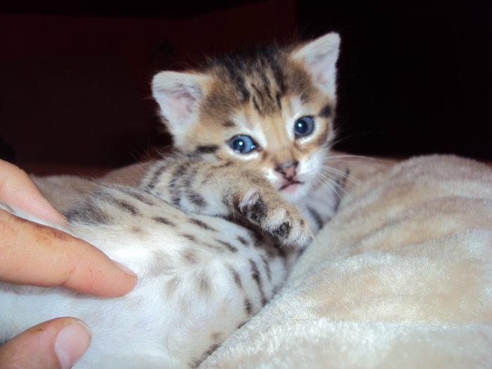 ..:Kitten:.. by Freewolf7