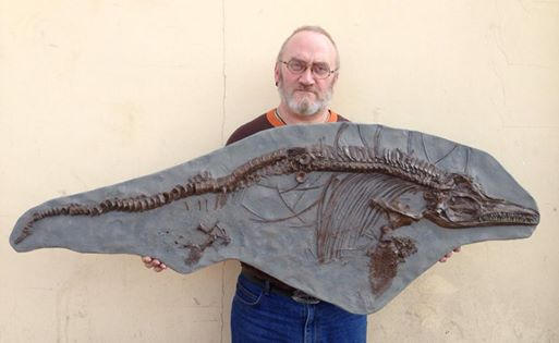 Ichthyosaurus Breviceps fossil