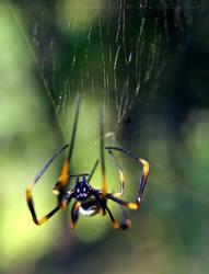 Just Hanging Around by Midnight-Flyer