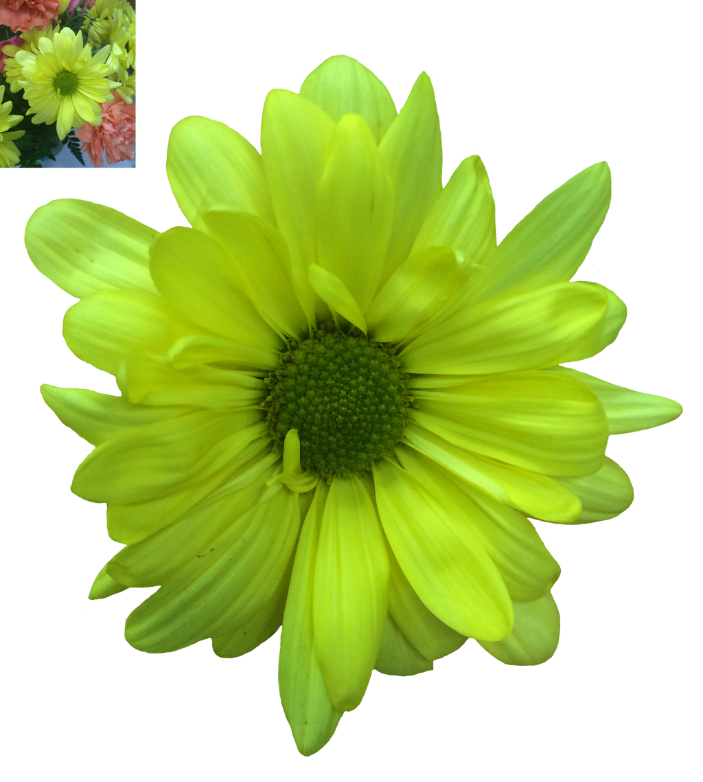 Green Daisy Png Stock by DLR-Designs on DeviantArt