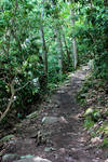Forest Path (Cascades) Stock 1