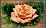 The rose for Tammara