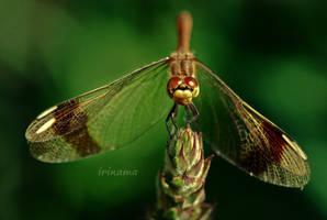 Beautiful by irinama
