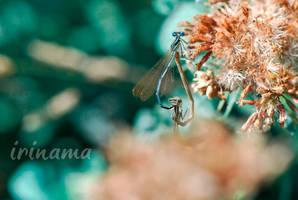 Amore by irinama