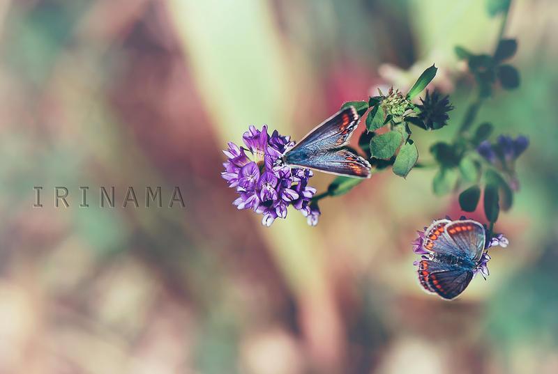 almost summer by irinama