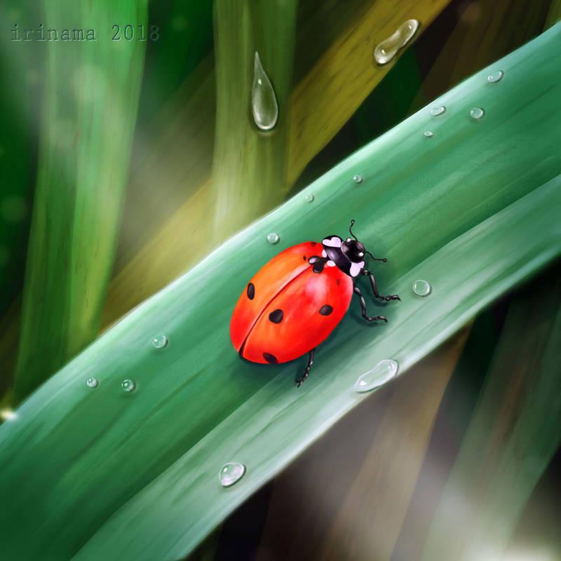 Ladybug by irinama