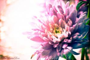 In the sweetness of friendship... by BlueLunarRose